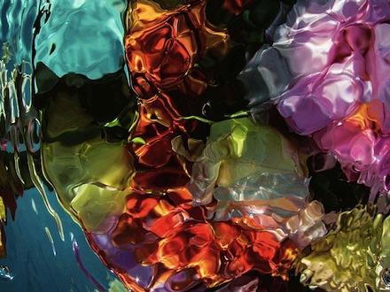 ysmf.gilles.bensimon.flowers