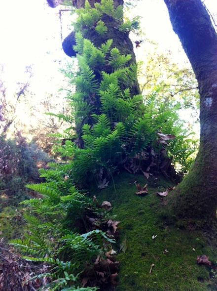 ysmf.forrest.flora