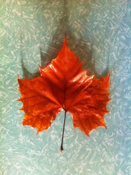 ysmf.orange.tree.leaf