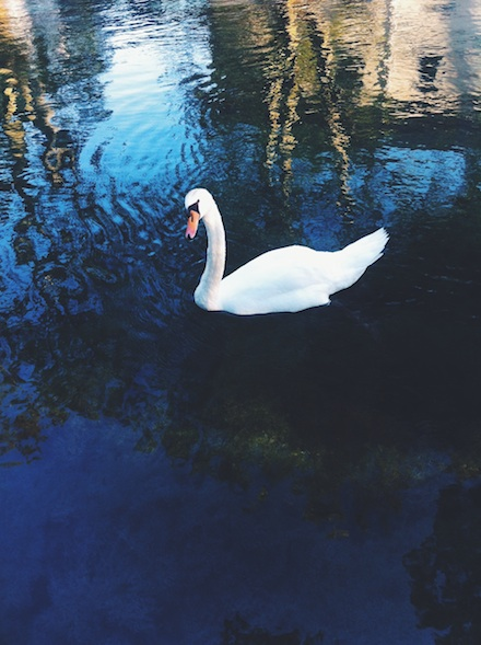 ysmf.swan.lake.annecy.france
