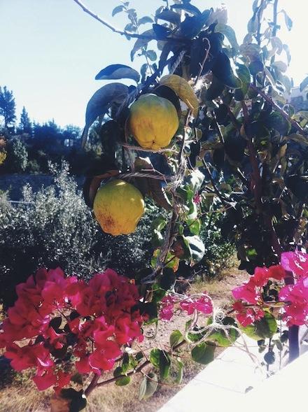 ysmf.kinsterna.hotel.garden.