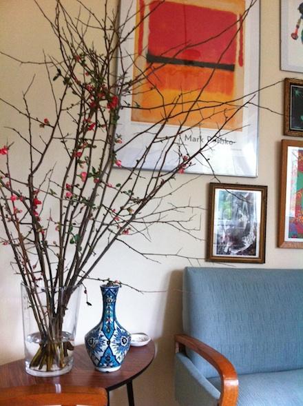 ysmf.chaenomeles.japonica.preciosa
