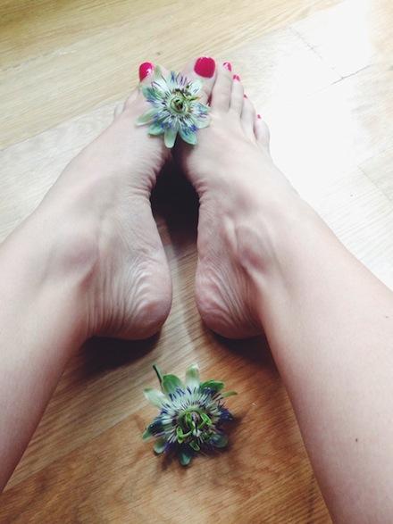 ysmf.passiflora