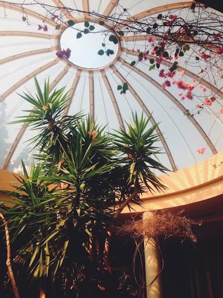 ysmf.dome