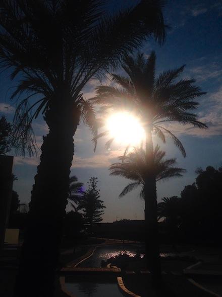 ysmf.palmtrees